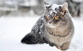 kotka w snqgnov