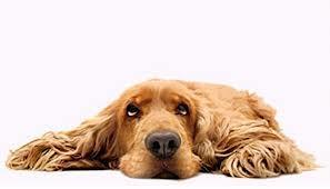 unhappy dog1nov